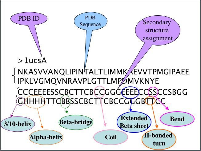 What are alpha helix, beta sheets and beta turns?